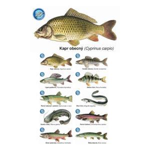 Črs sada magnetek s rybami 10 ks
